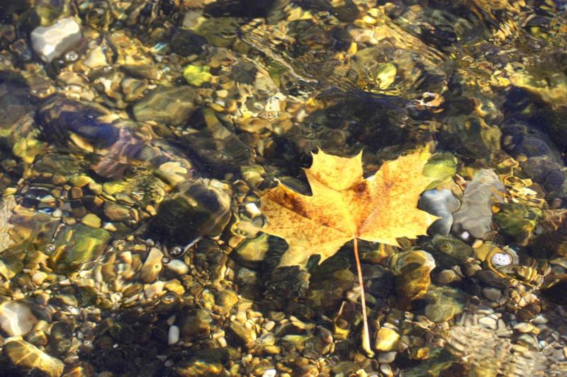 Herbstfischen.